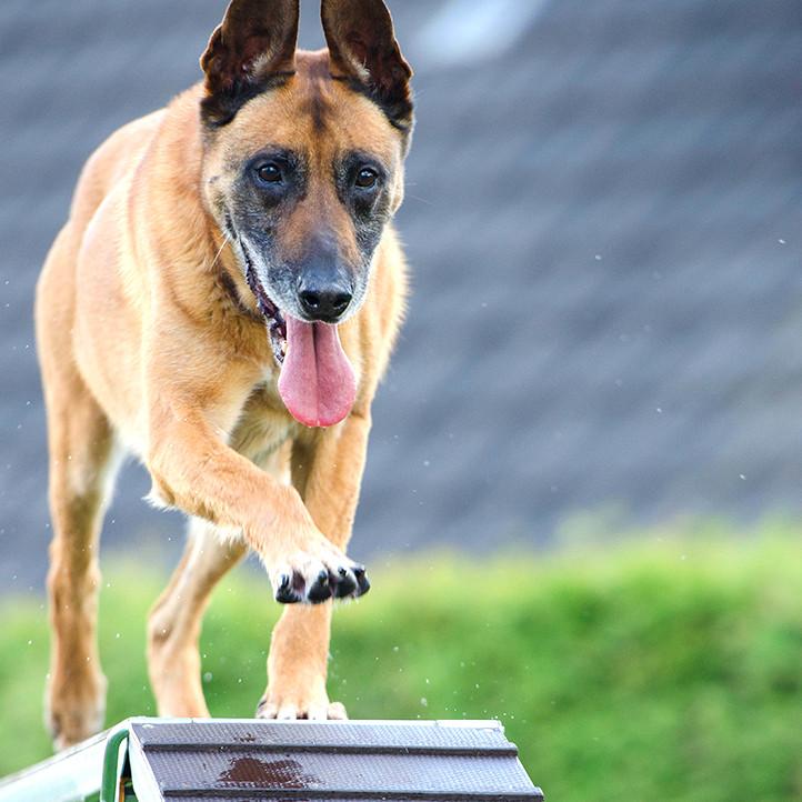 hotel clubs longeville sur mer agility chien